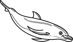 Dolphin coloring page 106