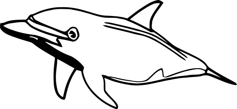 Dolphin Coloring Page 127