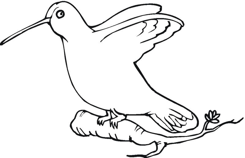Download Free Hummingbird Coloring Pages