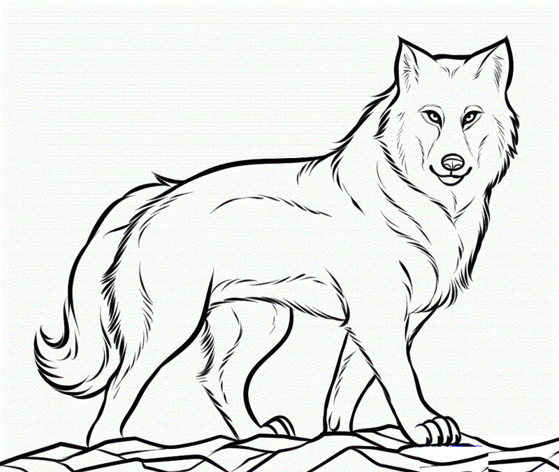 Downloadable Coloring Pages Wolf