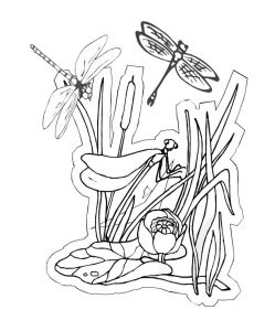Dragonflies coloring page