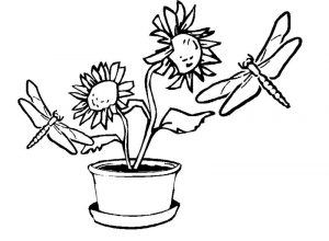 Dragonfly coloring pages pictures
