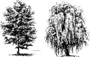 Draw trees black white coloring page