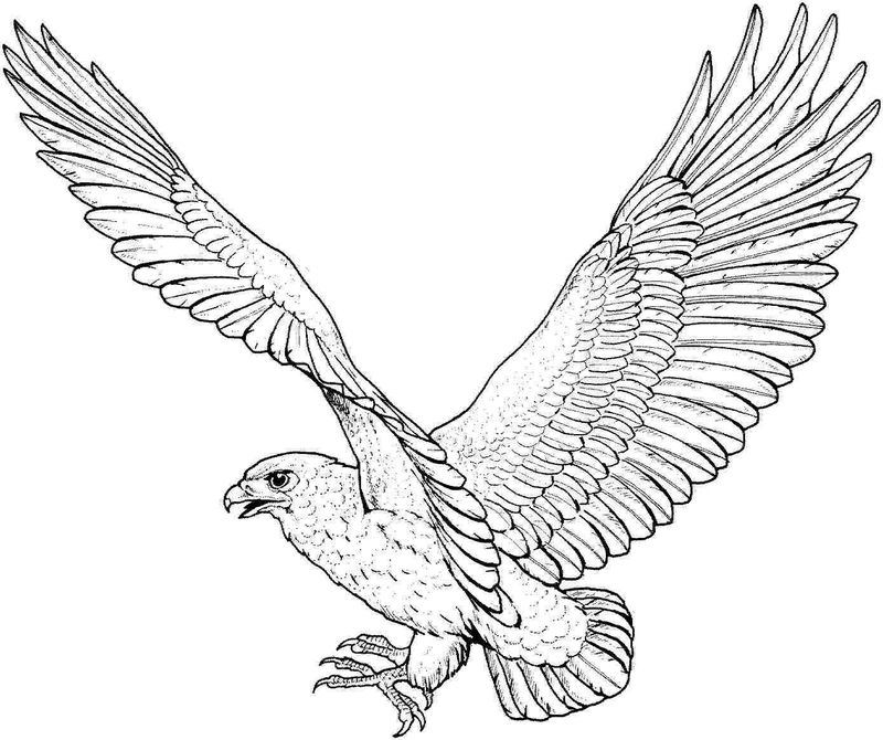 Eagle Coloring Pages For Kids 001