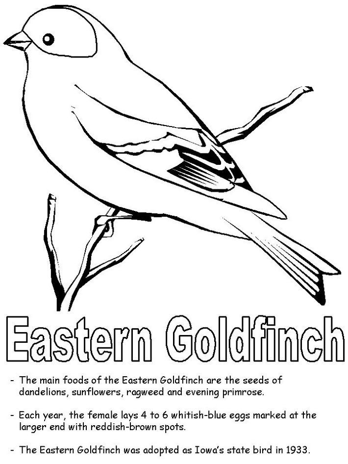 Eastern American Goldfinch Coloring Page