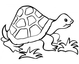 Easy coloring pages turtle 001