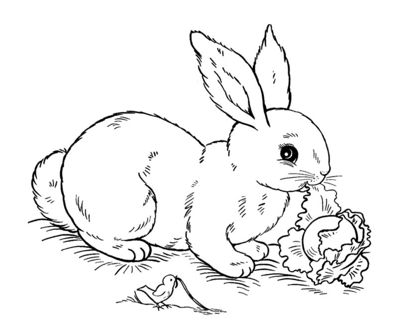 Eeaster Bunny Coloring Pages Kids