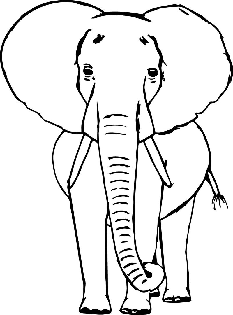 Elephant Sketch Coloring Page
