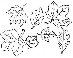 Fall coloring sheets for beginner