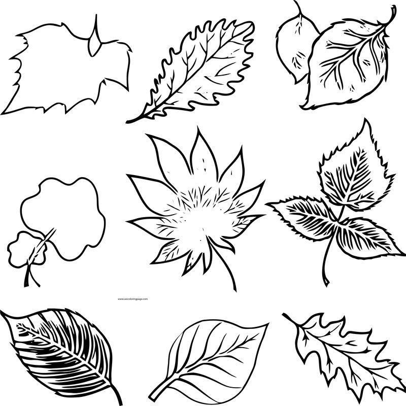 Fall Drawing Leafs Coloring Page