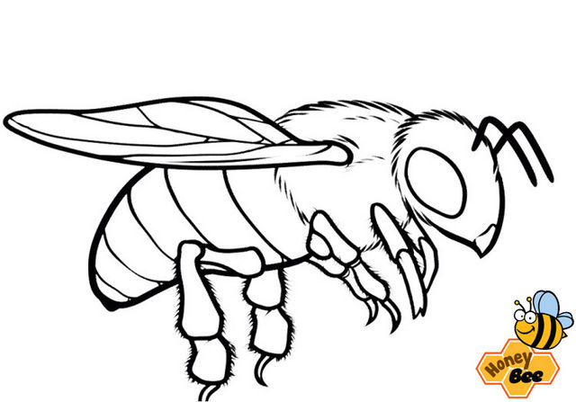 Fantastic Honey Bee Coloring Page 1