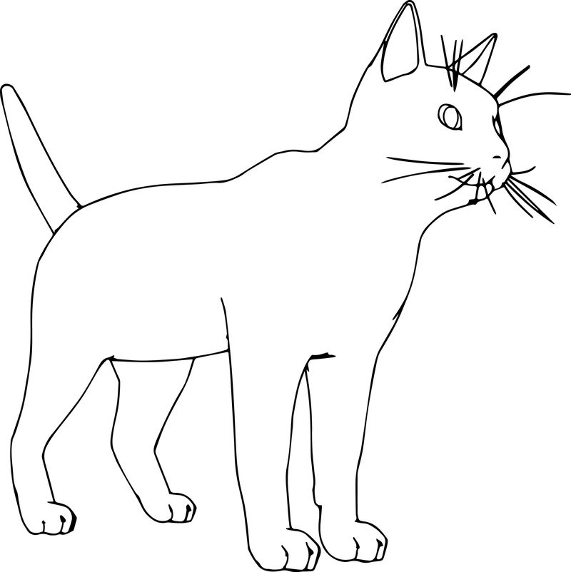 Fantastic Realistic Cat Coloring Page