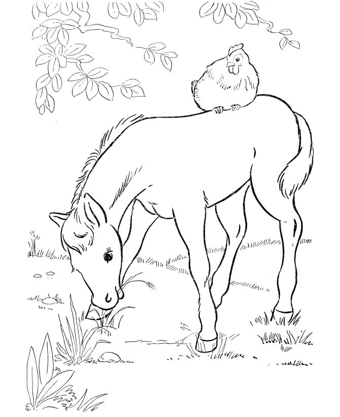 Farm Pony Coloring Pages