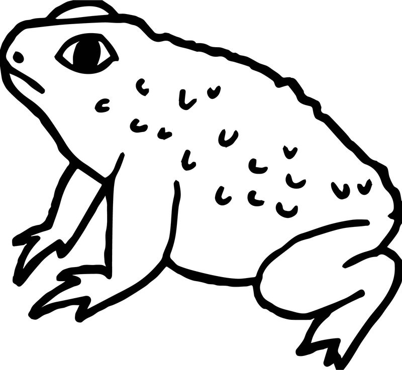 Fat Frog Coloring Page