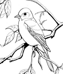 Female bluebird coloring page
