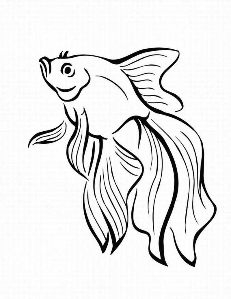 Fish Color Pages Adult