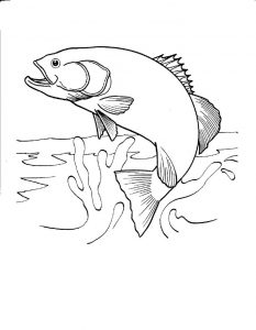 Fish coloring page for children