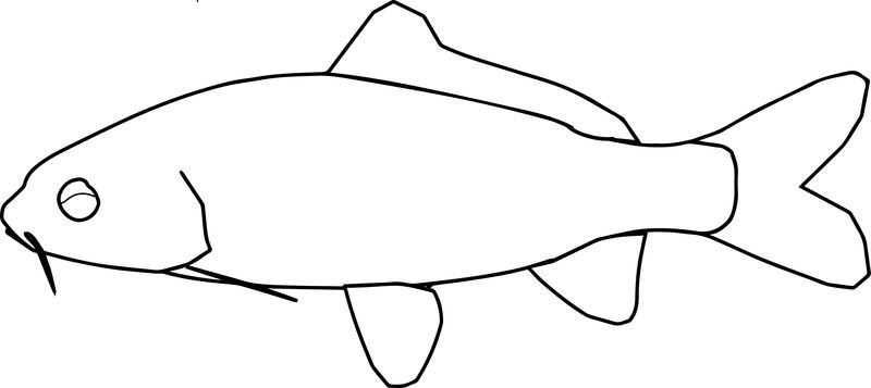 Fish16 Coloring Page