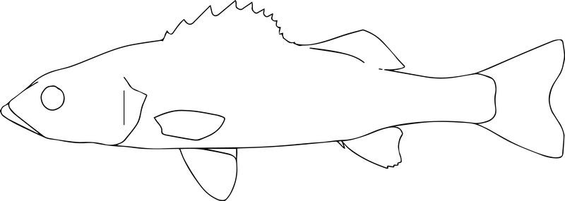 Fish30 Coloring Page