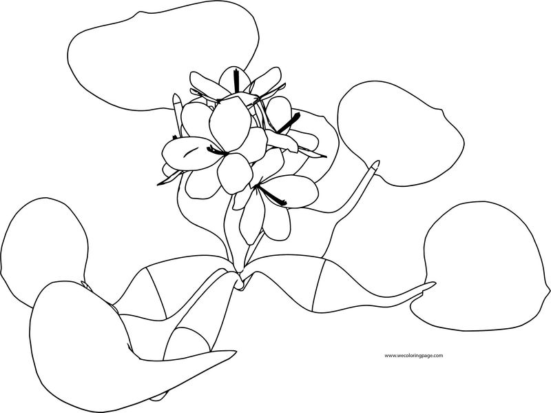 Flower Coloring Page 10