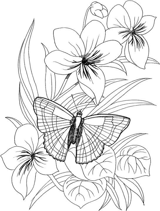 Flower Coloring Page For Adults Printable