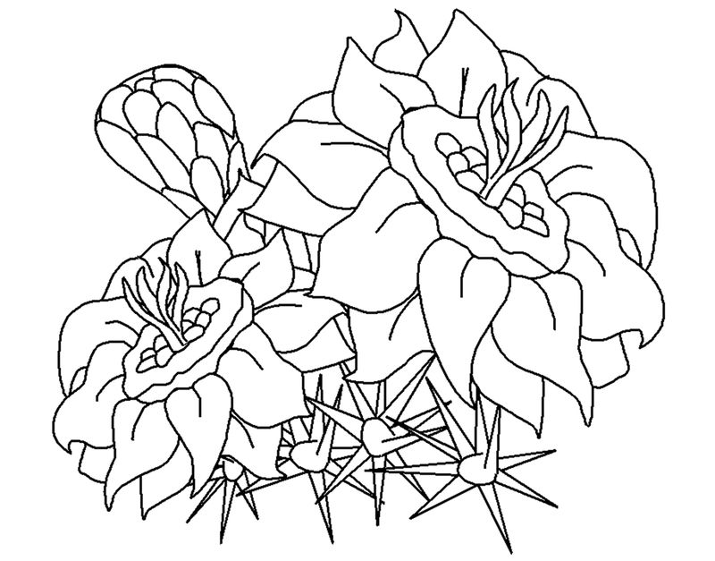Flower Images To Print 001