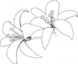 Flower two together coloring page