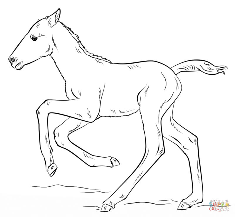 Foal Pony Coloring Page