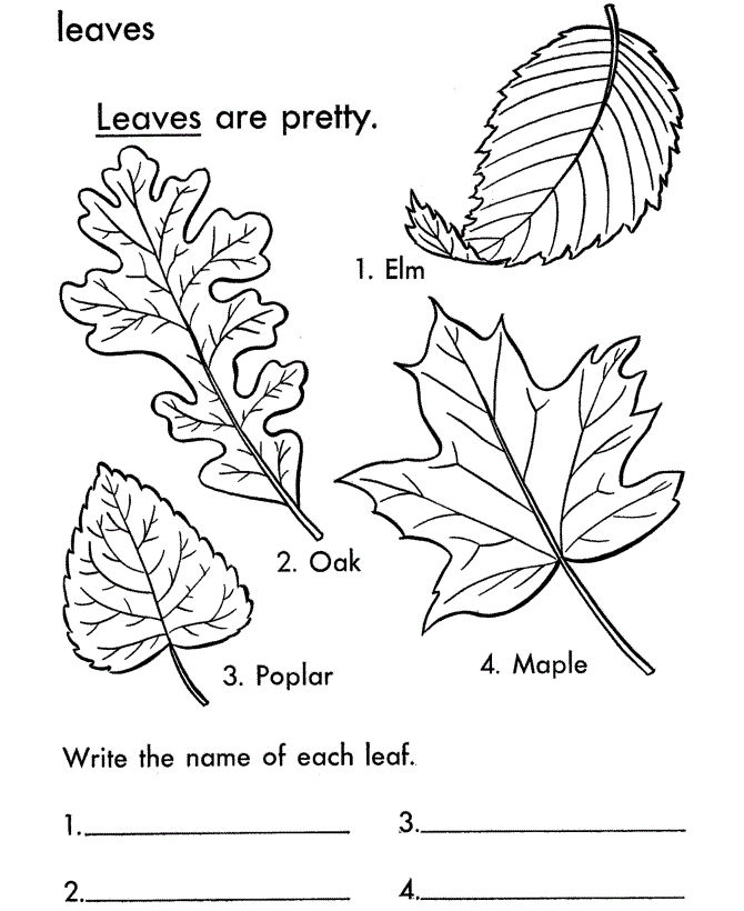 Four Leaf Clover Coloring Page 001