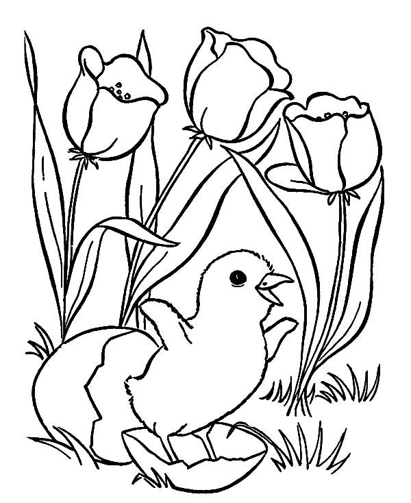 Free Chick Coloring Page