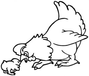 Free chicken coloring pages
