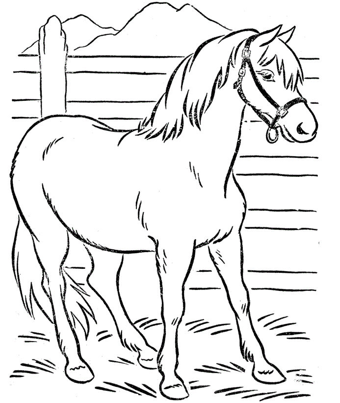 Free Horse Coloring Pages For Kids