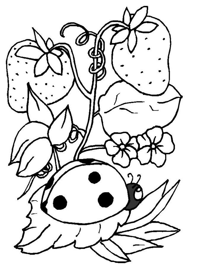 Free Ladybug Coloring Pages For Kids
