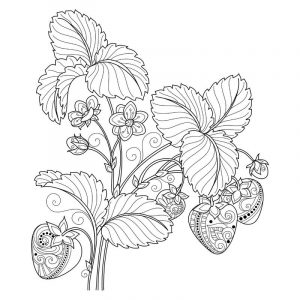 Free printable coloring pages for adults fruit