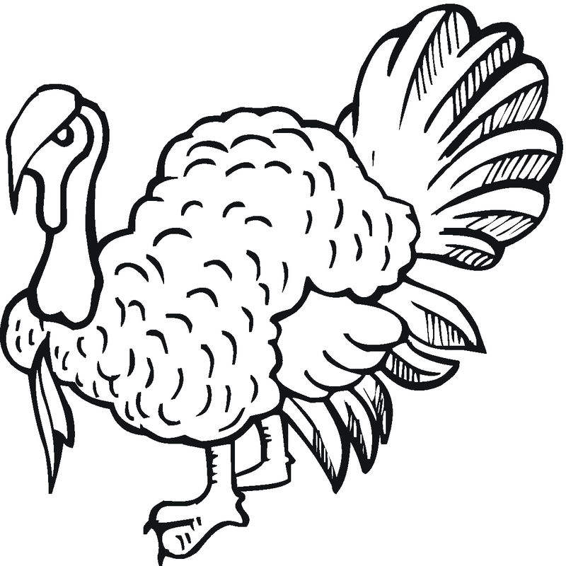 Free Printable Turkey Coloring Pages