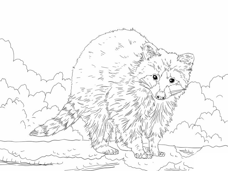 Free Raccoon Coloring Pages For Kids