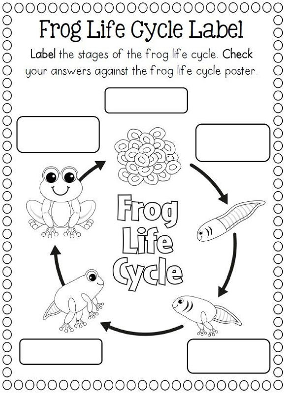 Frog Activities For Kids Life Cycle