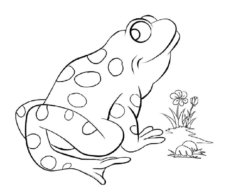 Frog Color Pages To Print