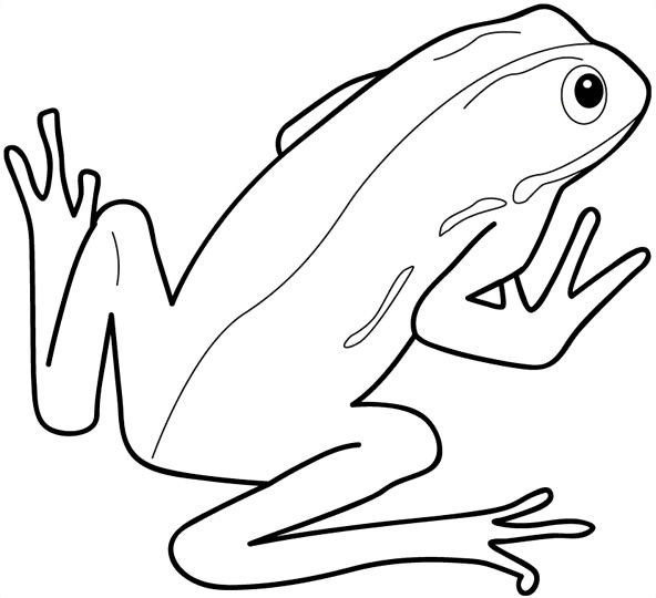 Frog Coloring Pages Printable
