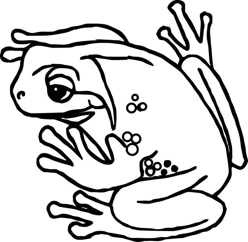 Frog Tree Amphibian Coloring Page