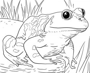 Frog zoo animals coloring pages