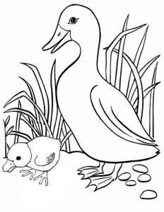 Fun and interesting duck and duckling coloring page