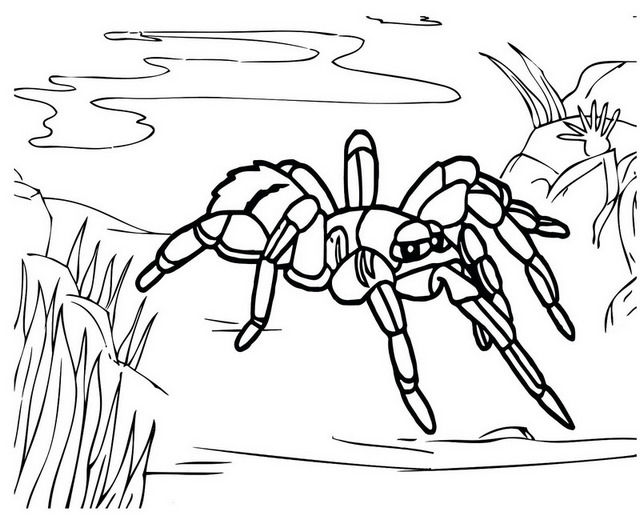 Giant Blue Tarantula Coloring Pages