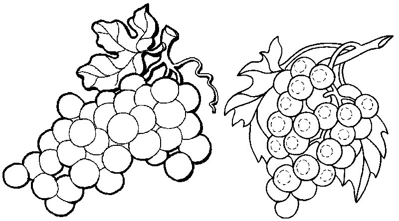 Grape Fruits Coloring Page