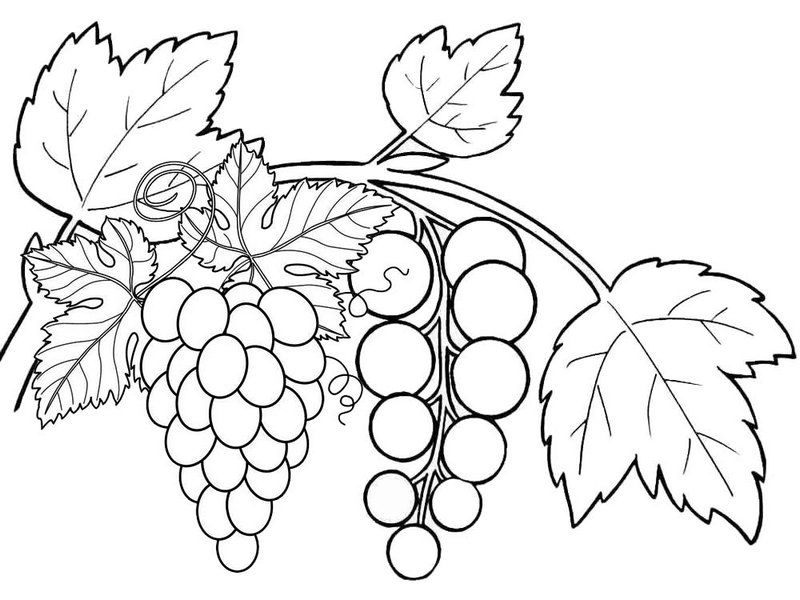 Grapes Fruits Coloring Pages 16 Copy