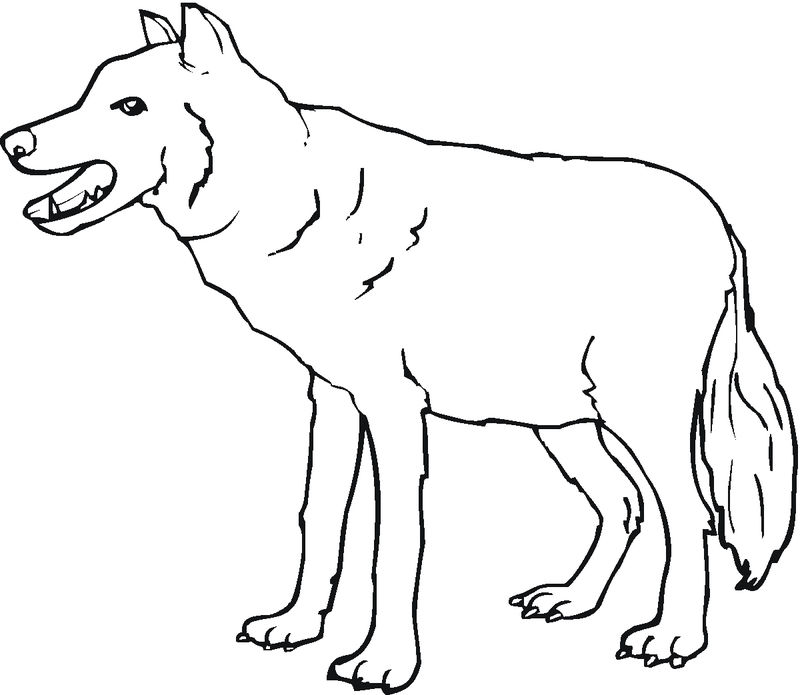 Gray Wolf Coloring Page