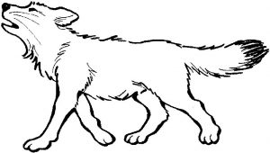 Gray wolf coloring pages