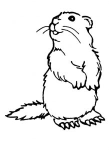 Groundhogs day coloring pages