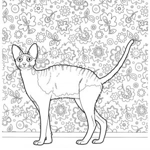 Hairless cat coloring pages for adults