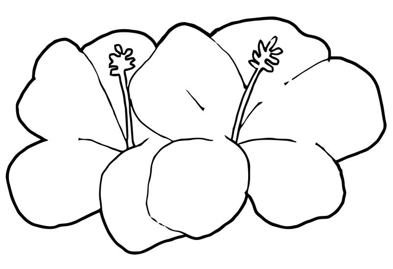 Hawaiin Flower 2 Coloring Page